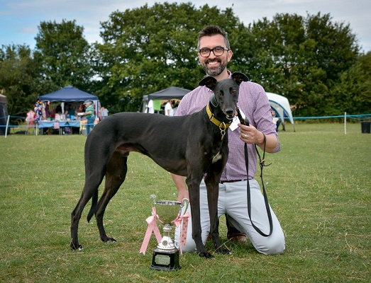 The lovely Harry, winner of the 'Chelsea's Ambassador Cup' at the 2015 Greyhound Walks Show.