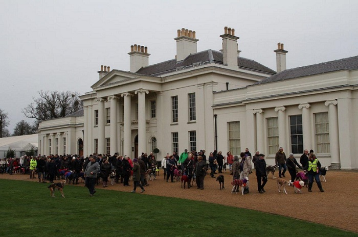 Photo of humans & hounds congregating in front of Hylands House at the 2016 New Years Day Greyhound Walk.