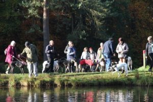 Photo of a typical Greyhound Walk, by the lake at Brandon Country Park.