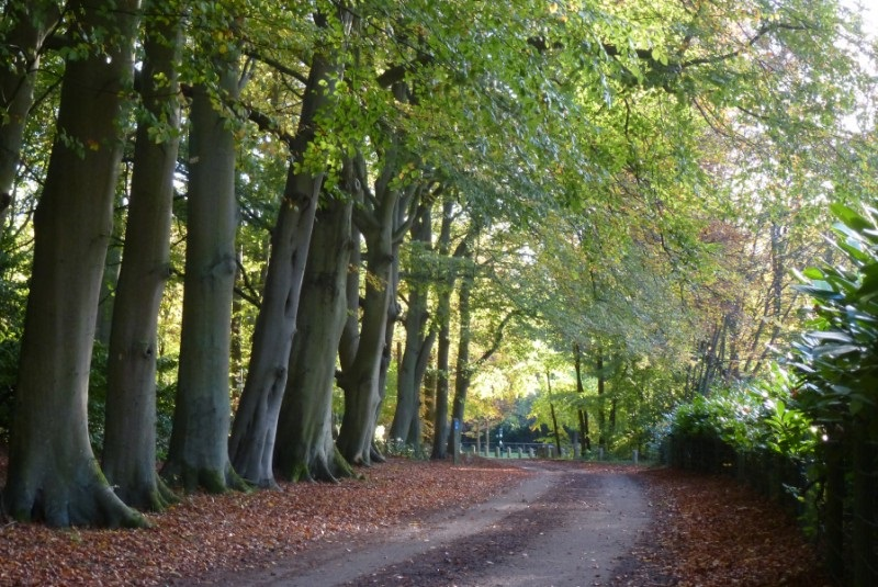 Photo of a tree lined entrance to Brandon Country Park.