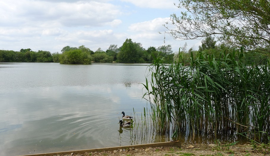 Photo of one of the many lakes at Chigborough.