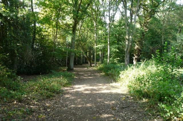 Photo of woodland on the Chipperfield Common walk route.