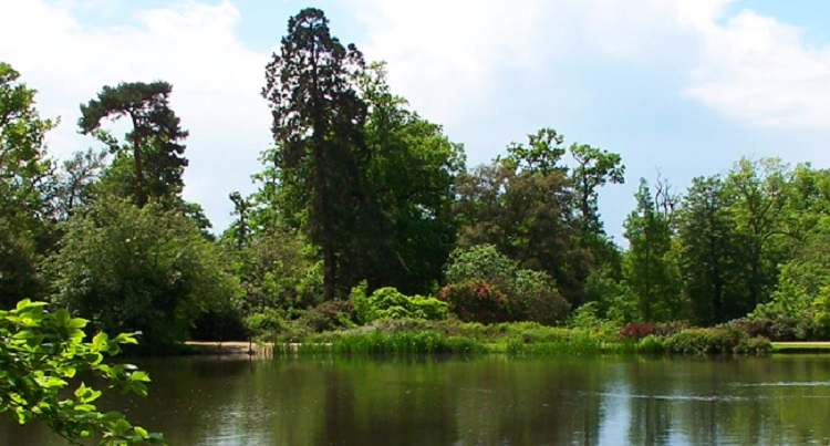 Photo of the middle lake at Danbury Country Park.
