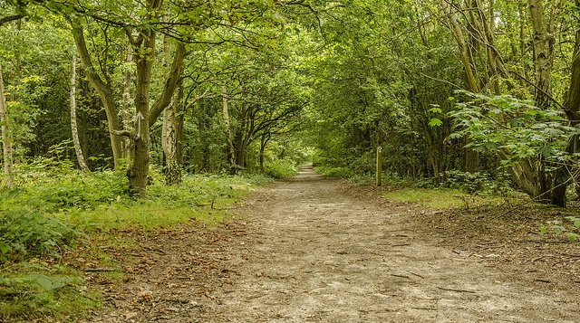 Photo of the main trail through Hainault Forest.
