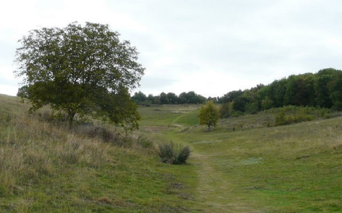 Photo of the trail across Therfield Heath.