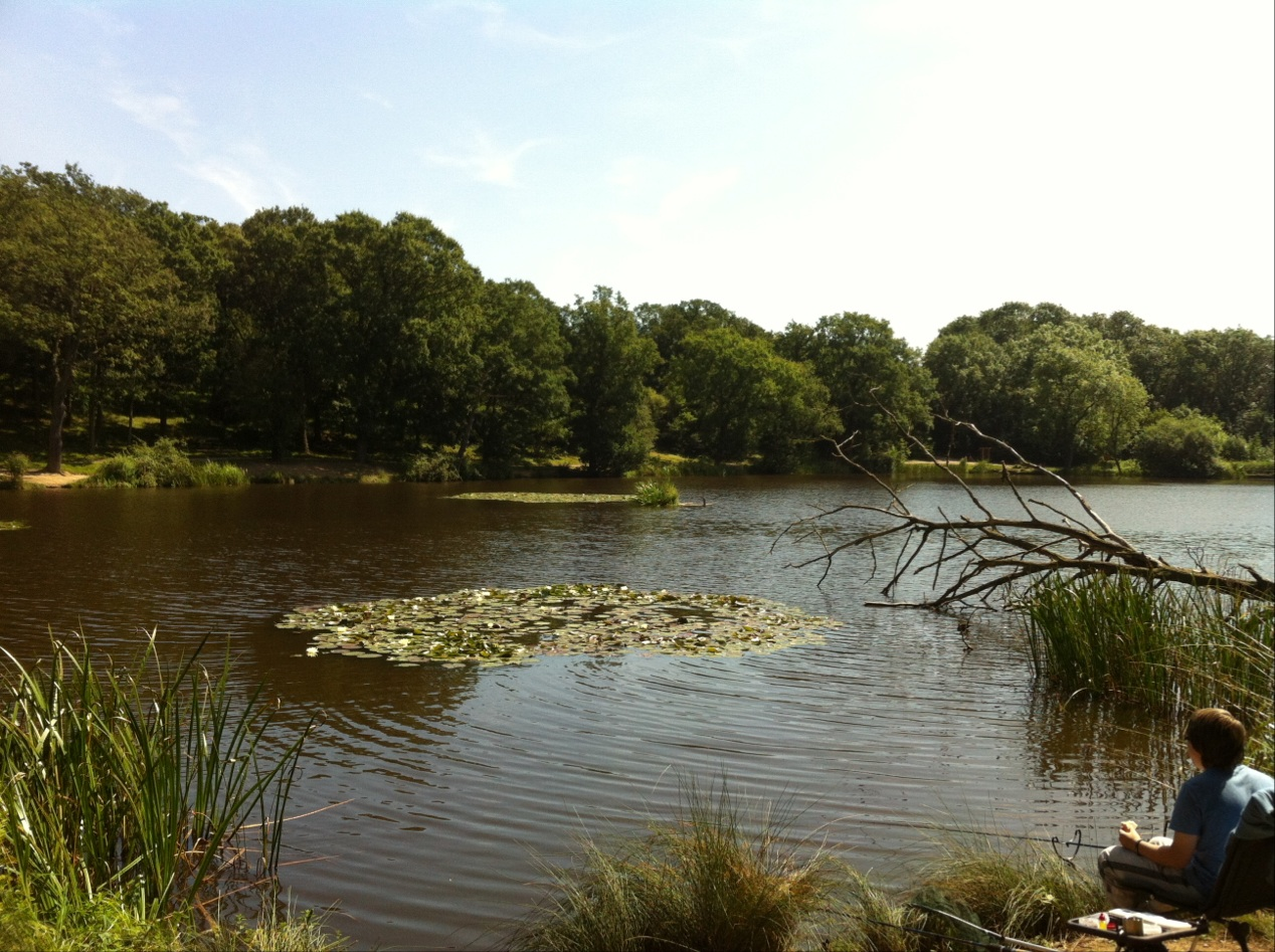 View of the lake at Thorndon Country Park South