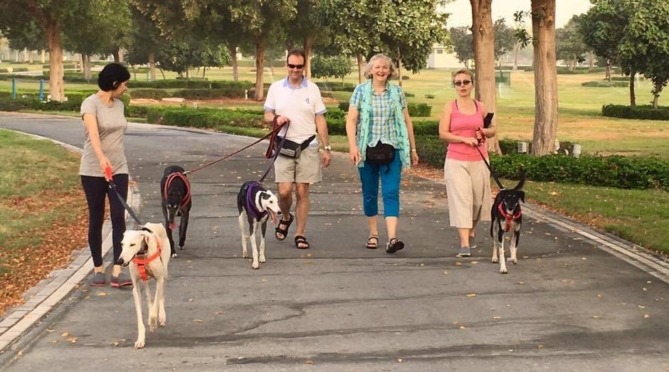4 hounds & 4 humans walking in Abu Dhabi.