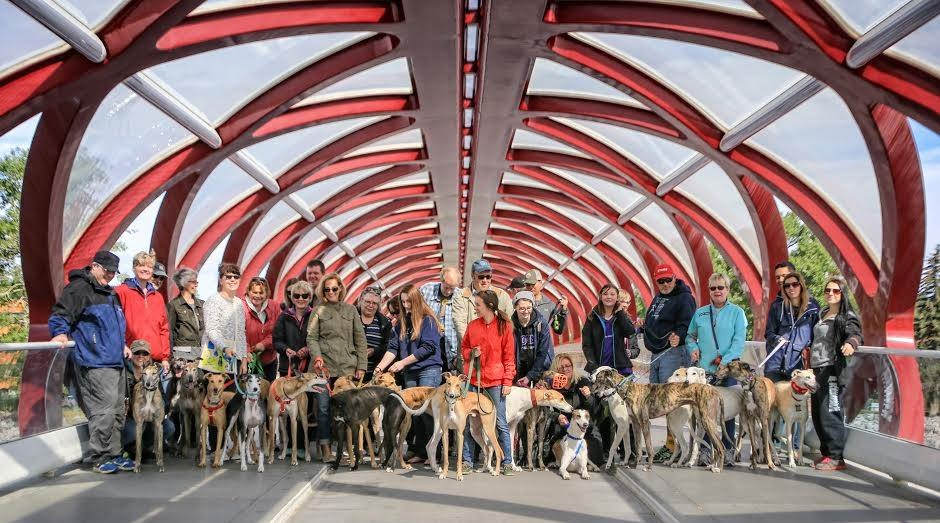 Large group of humans & hounds on the Peace Bridge in Calgary, Canada.
