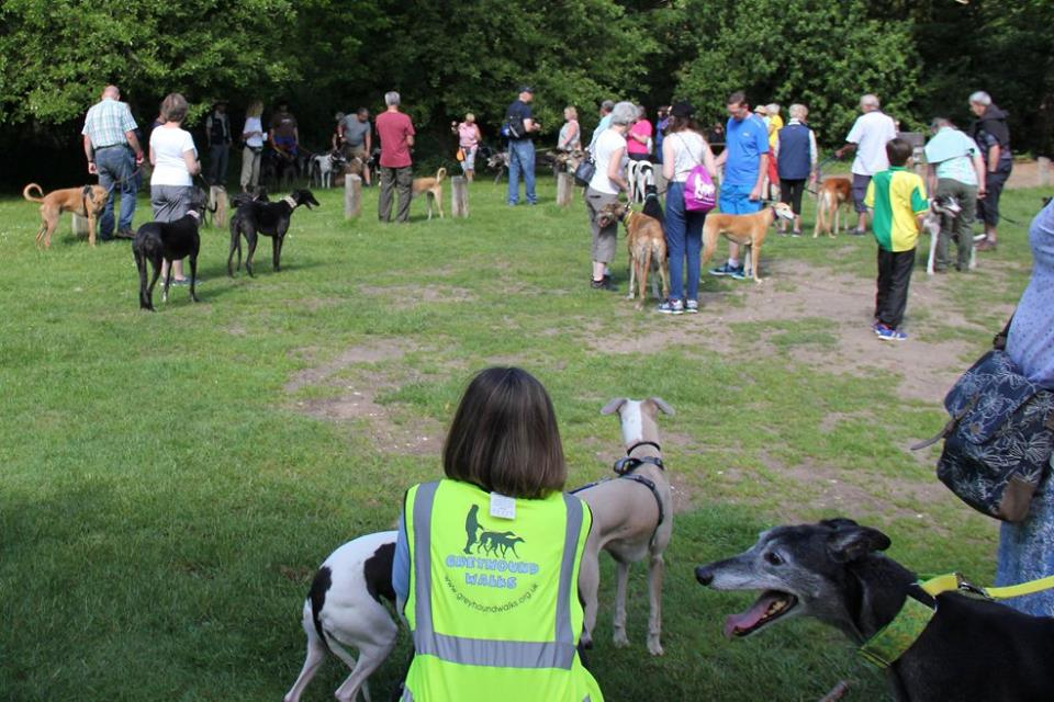 Brandon Greyhound Walk starting off