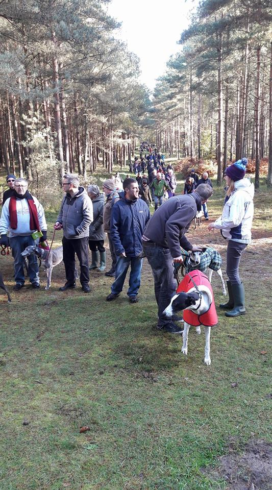 Brandon Country Park Greyhound Walk Novemeber 2017