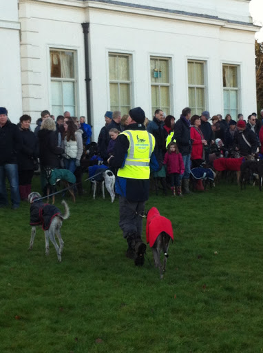 Hylands Park New Years Day Greyhound Walk