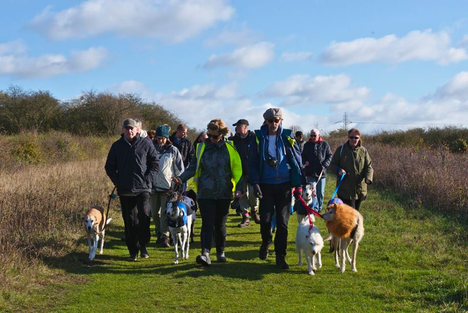 Wat Tyler Country Park Greyhound Walk November 2017