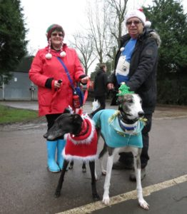 Humans and festive greyhounds